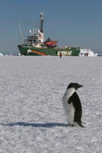 2006 Pinguin met Arctic Sunrise